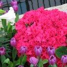 Azaleas & Mixed Flowers