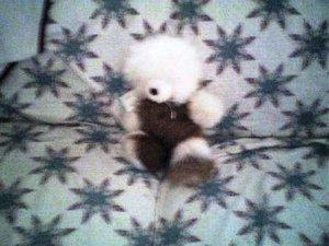 Alpaca Fur Bear 16 inchs