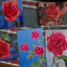 Roses in 4 views  Postcards* printed in Belgium
