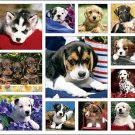 Puppy Love Calendar with Bonus