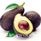 10pcs New Rare Green Avocado Seed Very Delicious Pear Fruit Seed