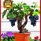 50pcs/bag Miniature Grape Vine Seeds PATIO SYRAH Vitis Vinifera Houseplant Seeds