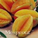 50pcs Carambola Seeds Star Fruit Seeds Rare Sementes Averrhoa Carambola Plant