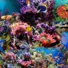 Fish Sea Ocean Wall Print POSTER Decor 32x24