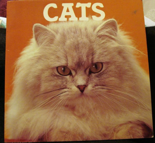 Cats picture book Colour Library Books soft cover books cm1245