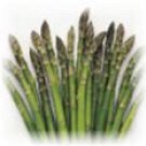 ASPARAGUS - MARY WASHINGTON. 25 Seeds. # G070-25.