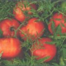 TOMATO - SILVERY FIR TREE. 35 Seeds. # G177-35.