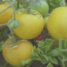 TOMATO - WAPSIPINICON PEACH. 20 Seeds. # G450-20.