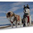 Siberian Husky Art Decor