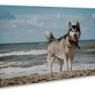 Siberian Husky Art 20x16 Framed Canvas Print Decor
