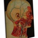 Vintage 1800 S Human Brain Surgical Anatomy Wall Decor 20x16 FRAMED CANVAS Print
