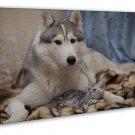 Cute Dog Siberian Husky Cat 20x16 Framed Canvas Print
