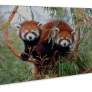Red Pandas Animal Image 20x16 Framed Canvas Print