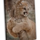 Cougar Cat Image 20x16 Framed Canvas Print
