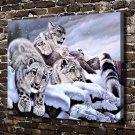 Softness of a Stare Snow Leopard Decor  20x16 FRAMED CANVAS PRINT