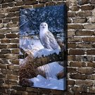 Raptor in White Owl Animal Decor  20x16 FRAMED CANVAS PRINT