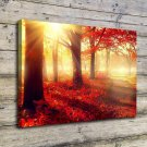 Nature Forest Park  20x16 FRAMED CANVAS PRINT