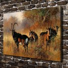 DAfrican Savannah Antelope  20x16 FRAMED CANVAS PRINT
