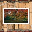 Autumn Tree In Garden FRAMED CANVAS PRINT CA 20x16 inch