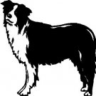 Border Collie - custom vinyl graphic - 5x5 inch