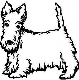 Scottish Terrier - custom vinyl graphics - 5x5 inch