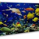 Fish Sea Ocean Art 20x16 Framed Canvas Print Decor