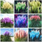 500pcs Rare Pampas Garss Pampas Seeds Pampas Grass Ornamental Bonsai Seeds