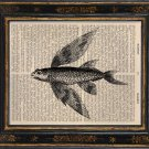Flying Fish Art Print on Antique Book Page Vintage Illustration
