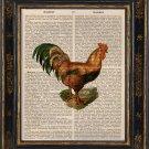 Chicken Antique Art Print on Book Page Vintage Illustration