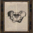 Pelvic Bone Antique Art Print on Book Page Vintage Illustration