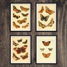 Butterflies Antique Print Set of 4 Wall Art Home Decor