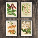 Orchids Antique Print Set of 4 Wall Art Home Decor