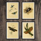 Insects Antique Print Set of 4 Wall Art Home Decor