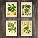Plants Antique Print Set of 4 Wall Art Home Decor