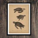 Sea turtles print - Vintage  Print Wall Art Home Decor - Antique