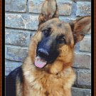 Cross Stitch Pattern- GERMAN SHEPHERD* EMAIL delivery*
