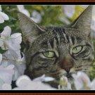 HIDEY KIT 3 Cross Stitch Pattern [PDF by email] (feline cat)