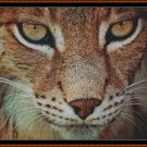 THE LYNX Cross Stitch Pattern [PDF by email] (feline cat)