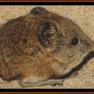 MINI CREATURES - ELEPHANT SHREW Cross Stitch Pattern [PDF by email] {rodent)