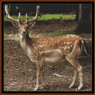 FOREST CREATURES - DEER Cross Stitch Pattern [PDF by email]
