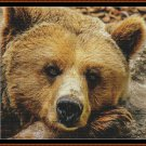 FIERCE CREATURES - GRIZZLY Cross Stitch Pattern [PDF by email] (bear)