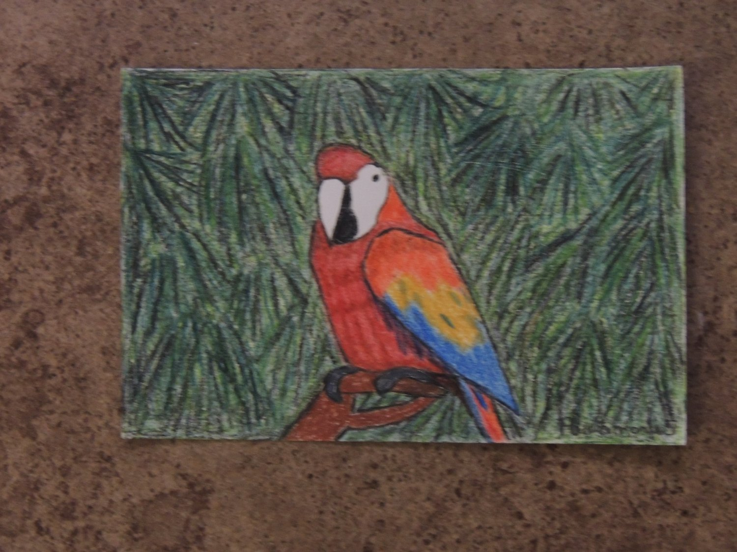Tropical Bird #5