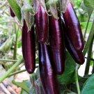 Organic Heirloom Eggplant Aubergine Little Fingers Solanum Melongena Seeds