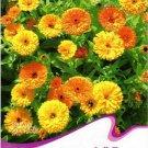 1 Original Pack, 50 Seeds / Pack, Calendula Seeds CALENDULA OFFICINALIS
