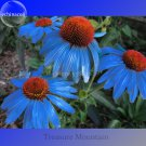 Rare 'Yangko' Light Blue Echinacea purpurea, 100 Seeds, big blooms blue petals