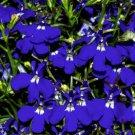 50 Lobelia Sapphire Multi Pelleted Garden Starts Nursery Seeds