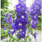 500 Seeds Purple Rocket Larkspur Delphinium Flower Perennial