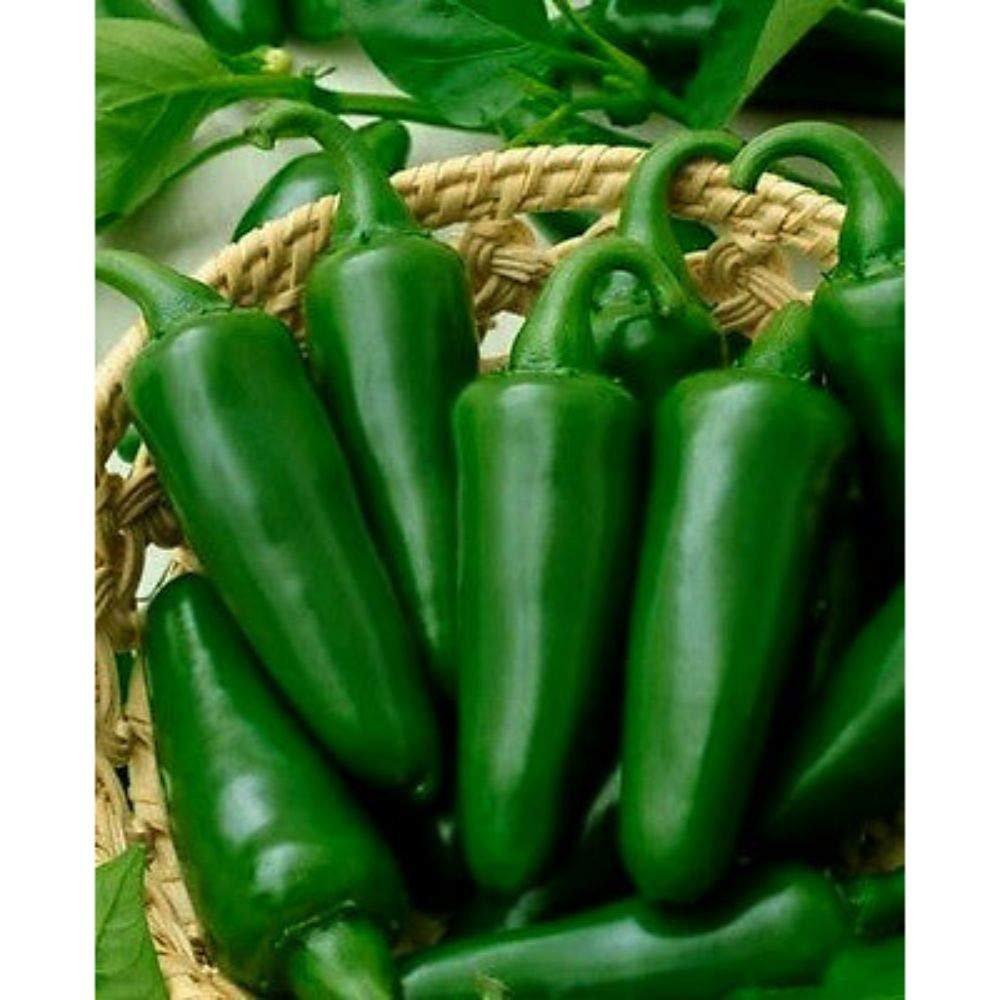 50ct Jalapeno Pepper, Tam Jalapeno, Heirloom, Hot Non-Gmo Seeds