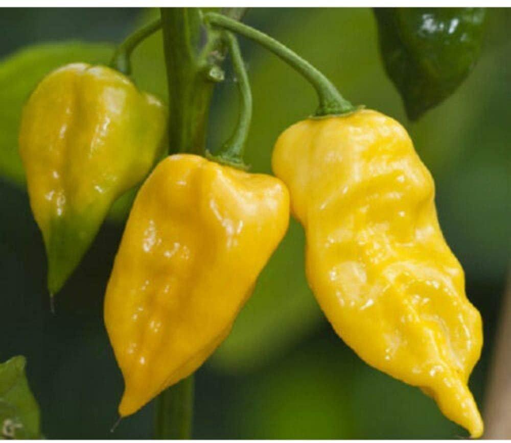200 Hot Pepper Chilli Lemon Habanero Seeds