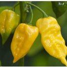 200 Hot Pepper Chilli Lemon Habanero Seeds